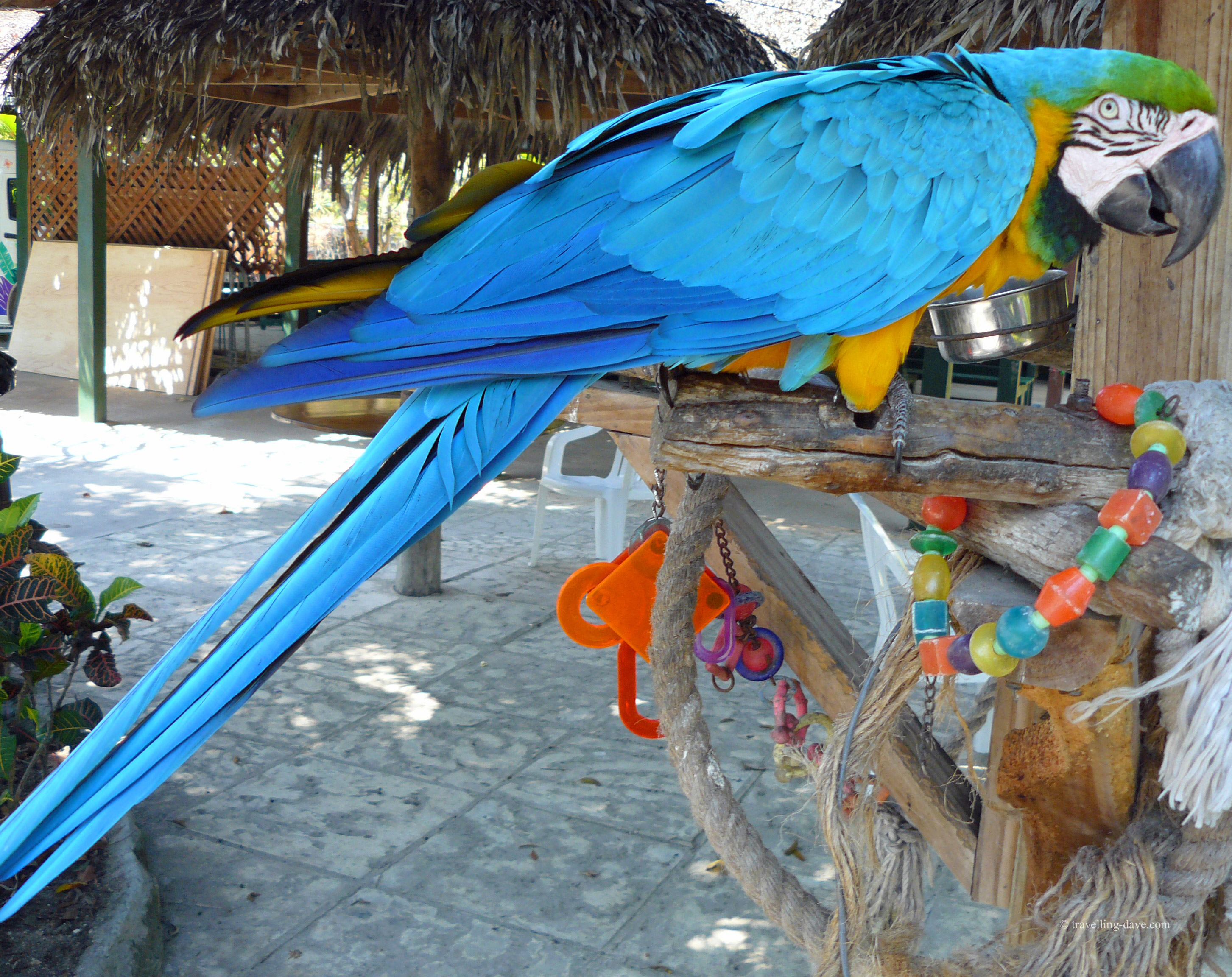 A colorful parrot at Nassau's Ardastra Gardens.