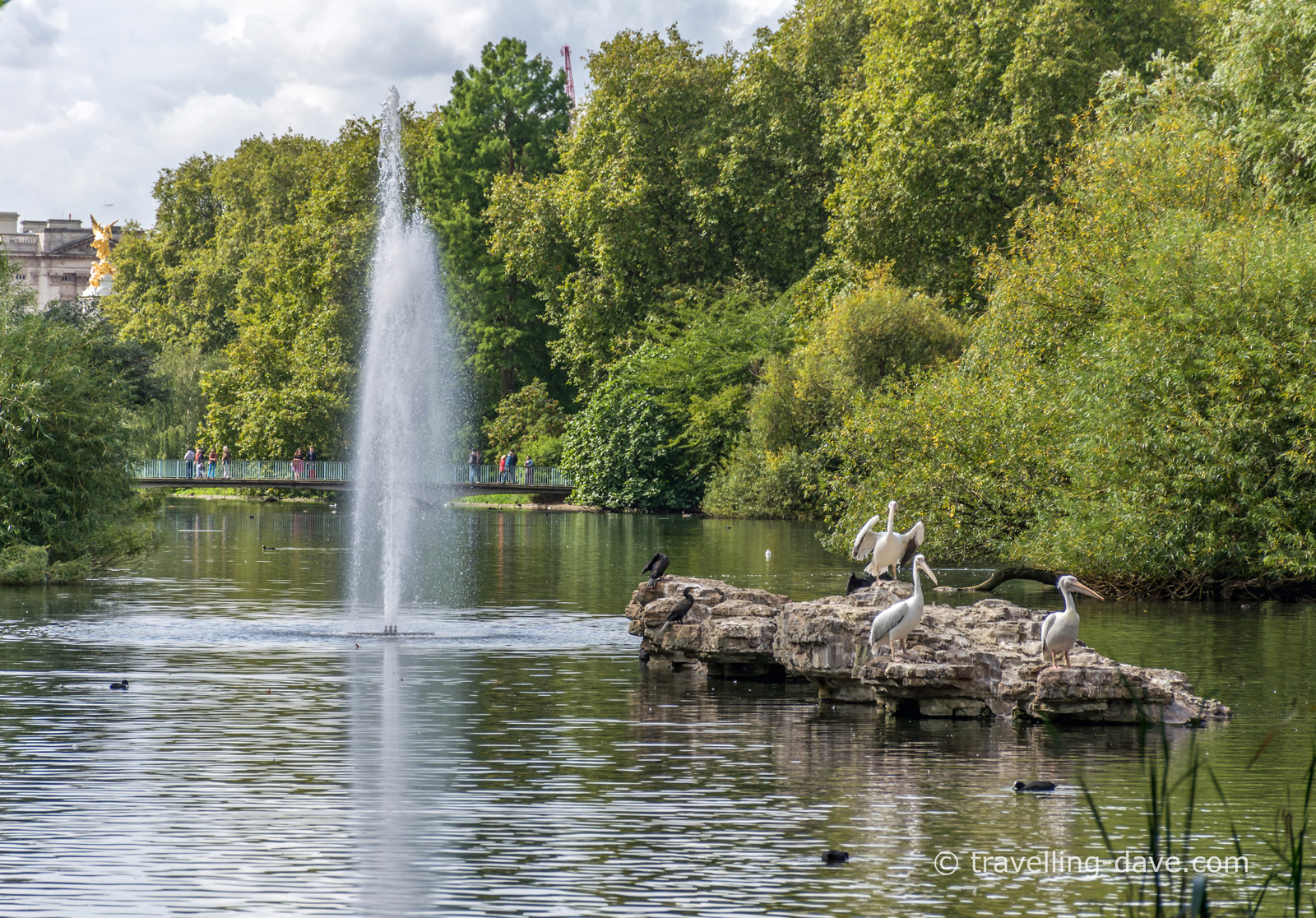 Fountain and pelicans in London's St.James's Park