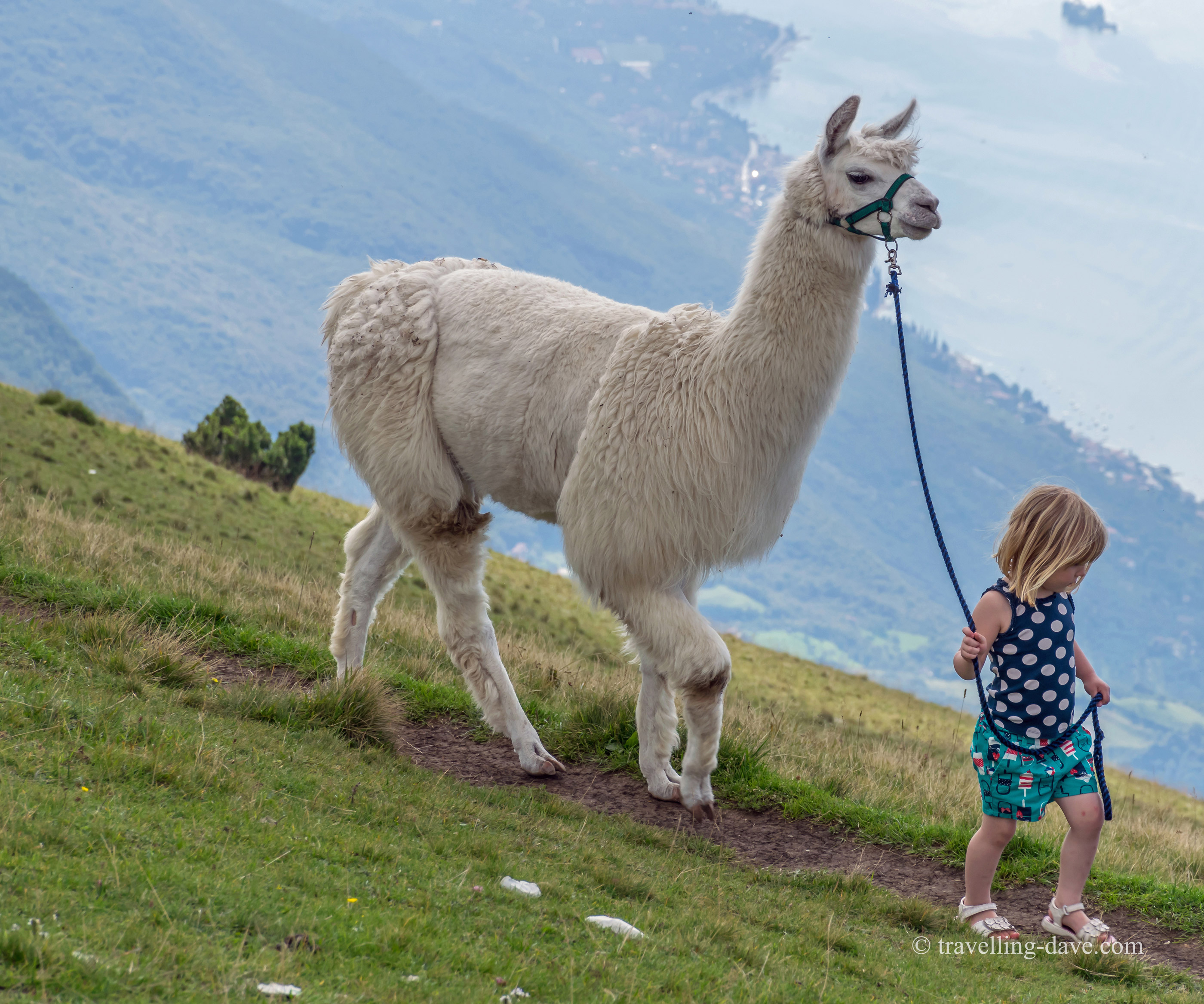 A little girl and an alpaca in Italy
