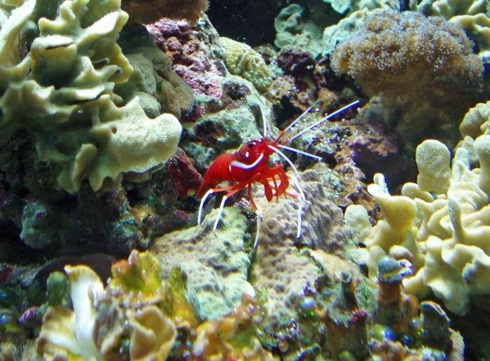 Looking into one of London Zoo Aquarium tanks
