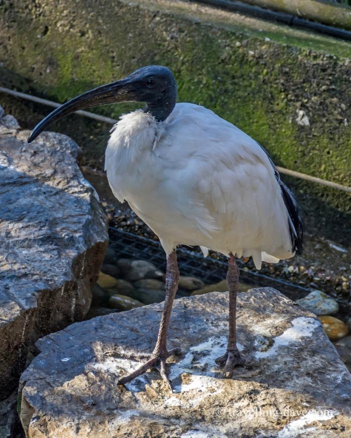 One of Snowdon Aviary birds