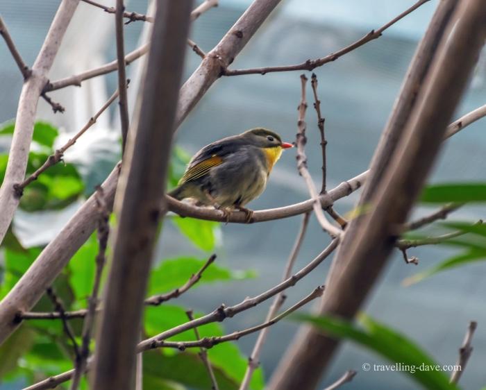 One of Blackburn Pavilion birds