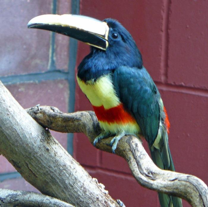 A bird in the African Bird Safari enclosure at London Zoo