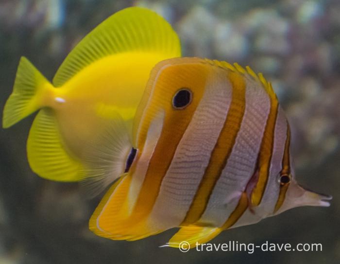 Colorful fish swimming in London Zoo Aquarium