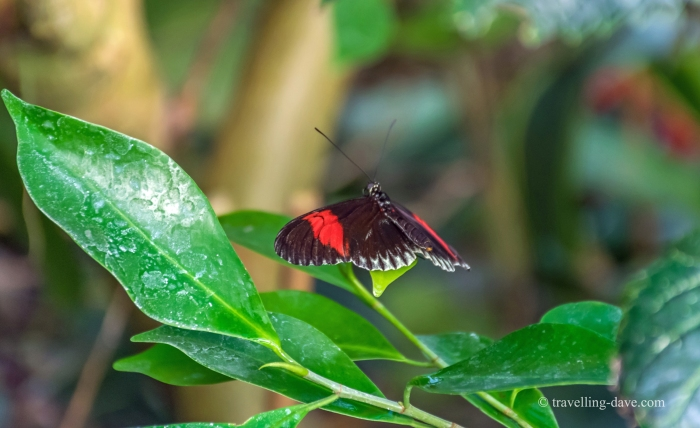 Butterfly flying past a plant