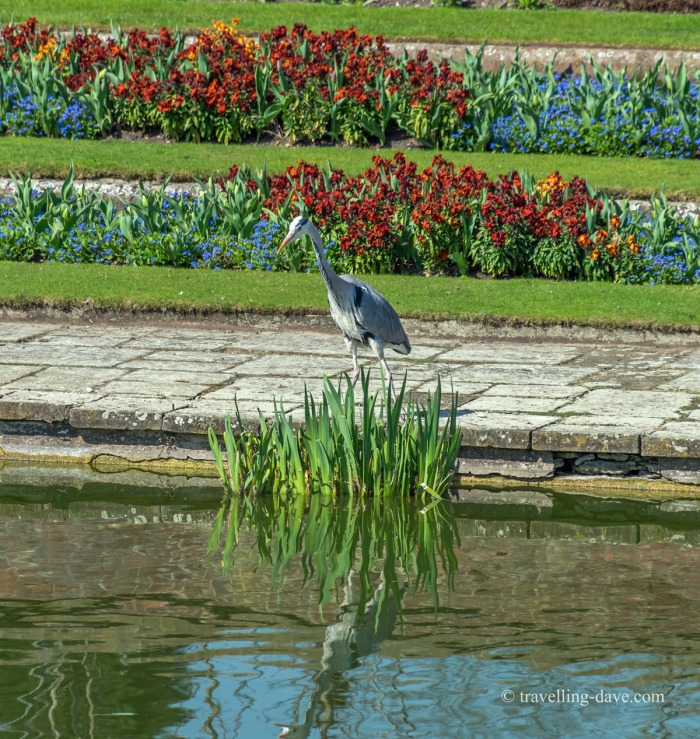 A heron standing in the garden at Kensington Palace