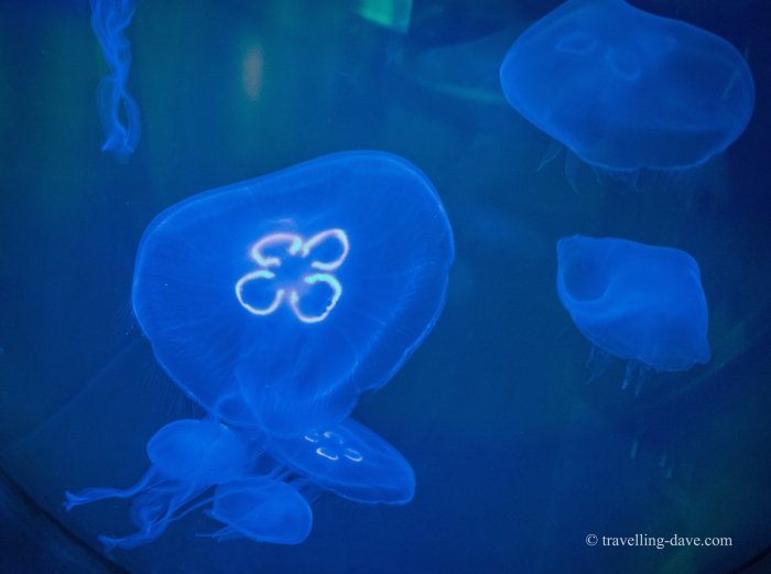 London Zoo Aquarium jellyfish