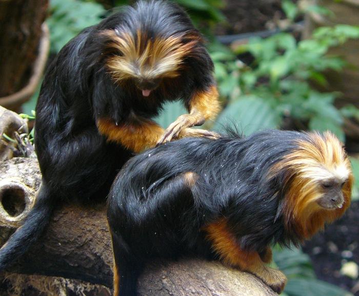 Two of London Zoo monkeys