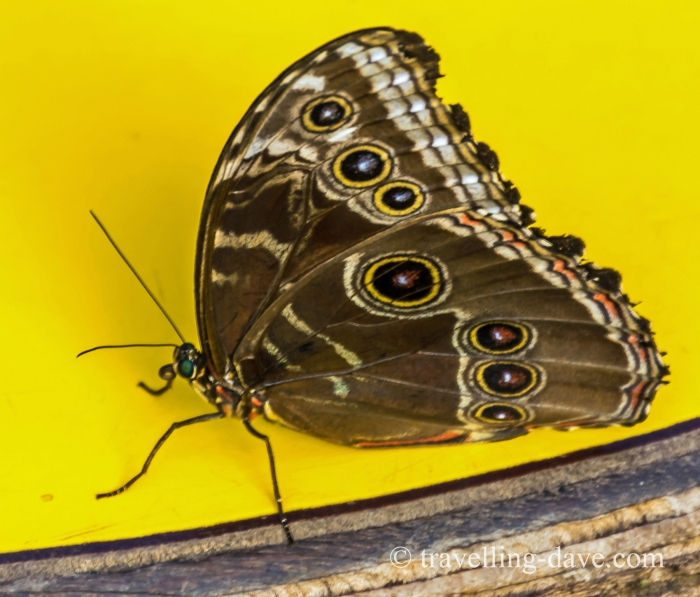 Butterfly against a yellow background