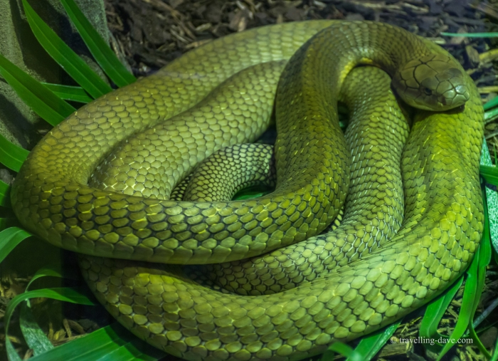 One of London Zoo snakes