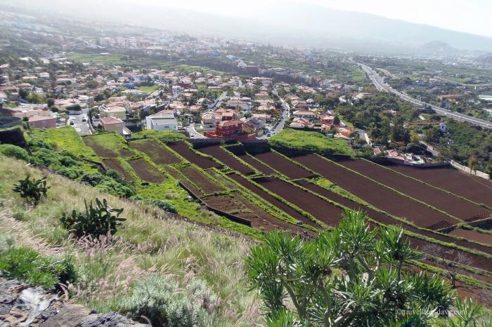 Valle de La Orotava in Tenerife