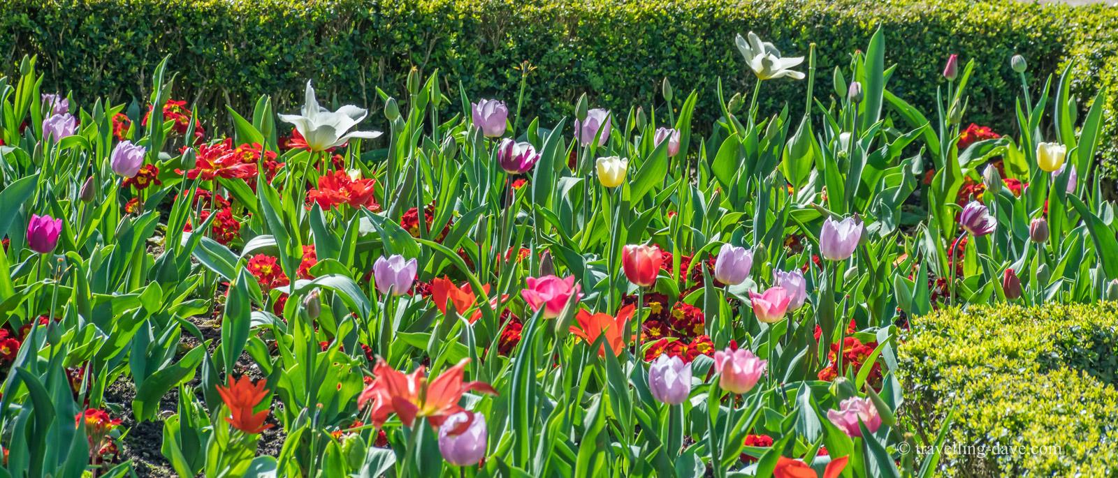 Dutch Gardens Flowers, Holland Park, London