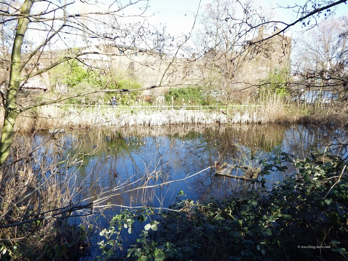 View of the pond at Camley Street Natural Park