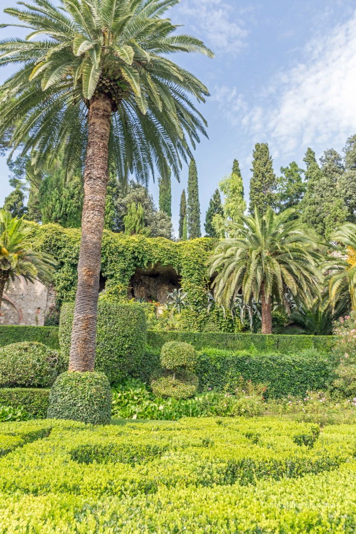 Palm trees and gardens