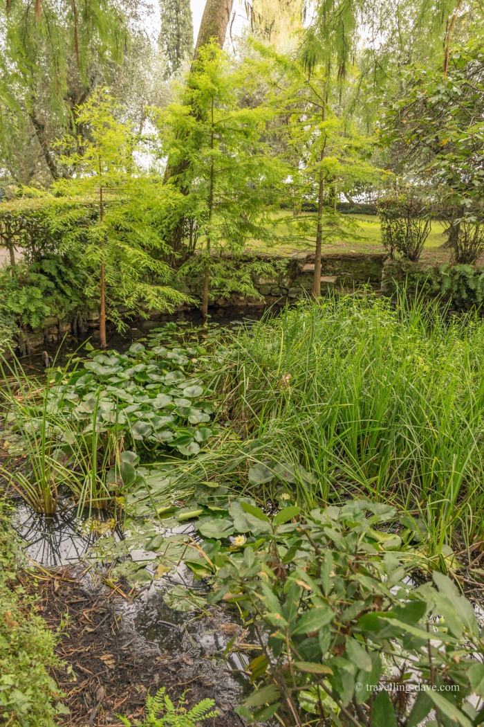 Plants growing in a pond