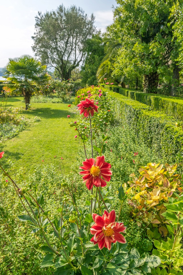 View of three red flowers in a garden