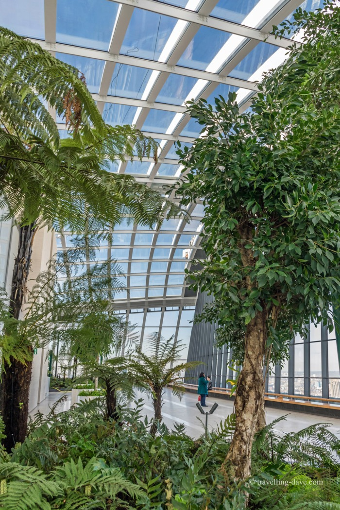 View of some of the Sky Garden plants