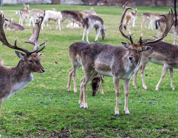 View of some of Home Park's deer