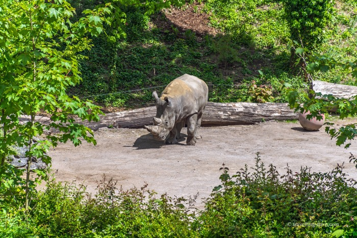 View of one of Lille Zoo's rhinos