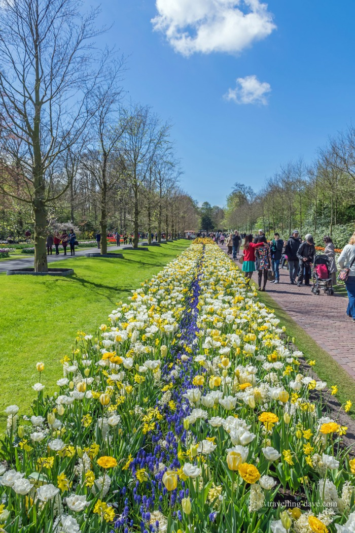 Flowers along the path at Keukenhof