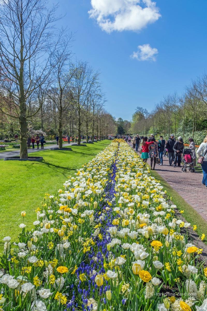 Flowers along the path at Keukenhof