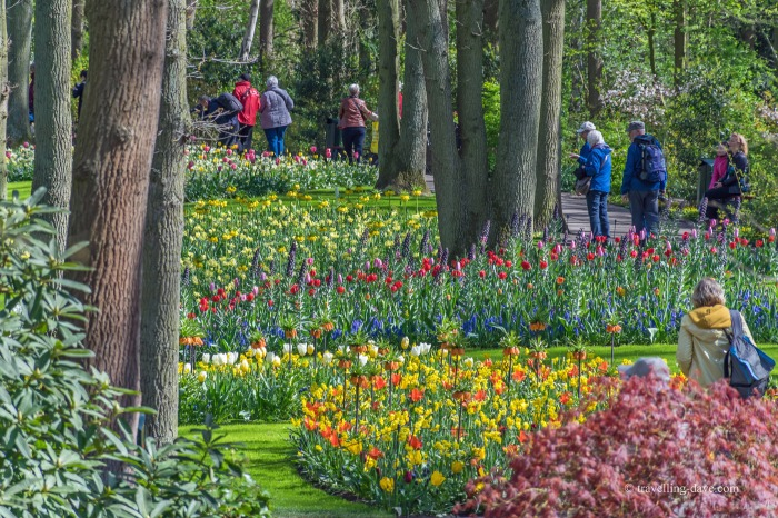 View of some of Keukenhof's visitors