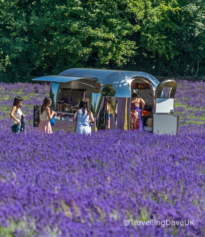 View of a mobile cafe' in a lavender field