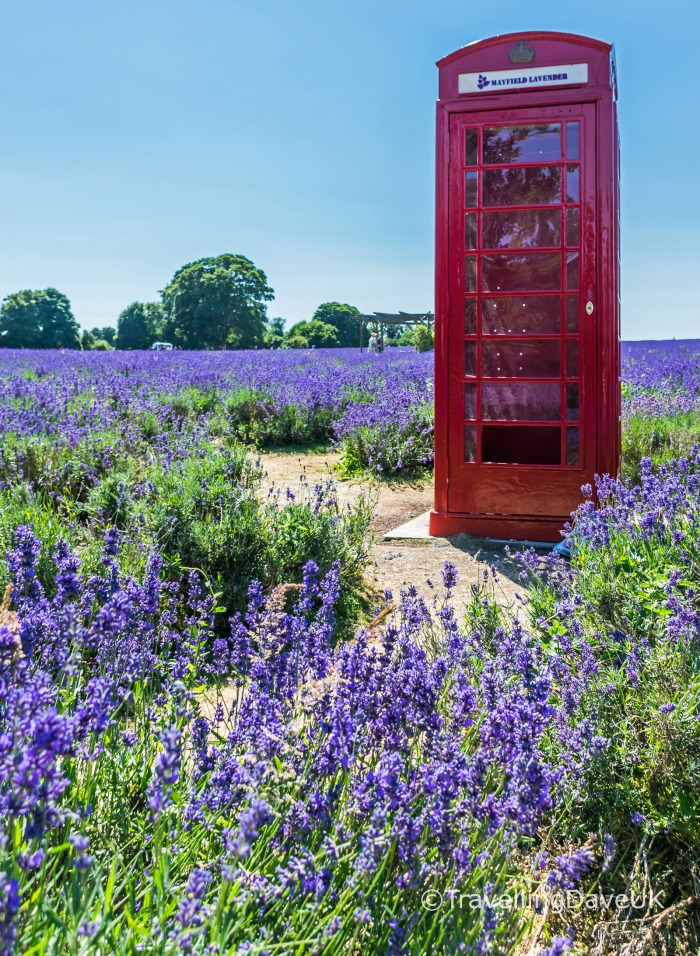 A red phone box and lavender