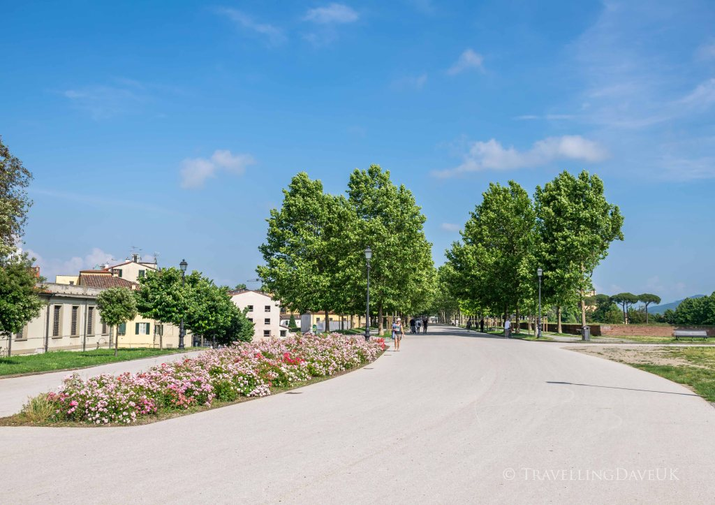 View of the promenade of Lucca city walls in Italy