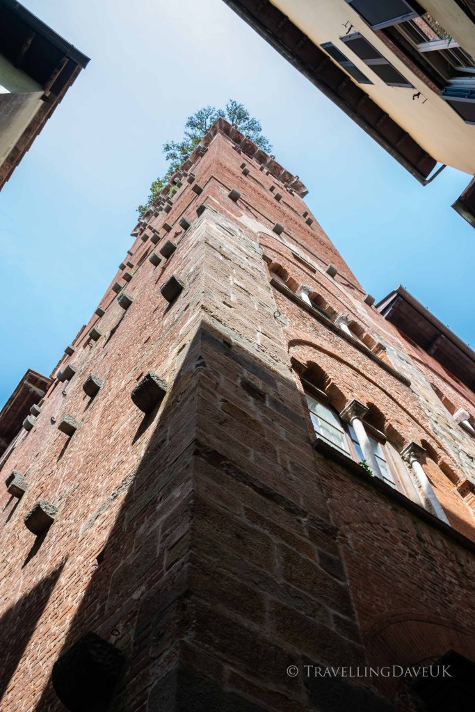 Looking up at Guinigi Tower in Lucca in Italy